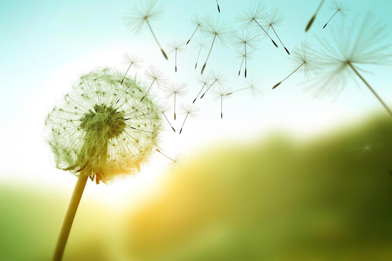 L'energia eolica è una fonte rinnovabile che offre molti vantaggi ma come funziona?