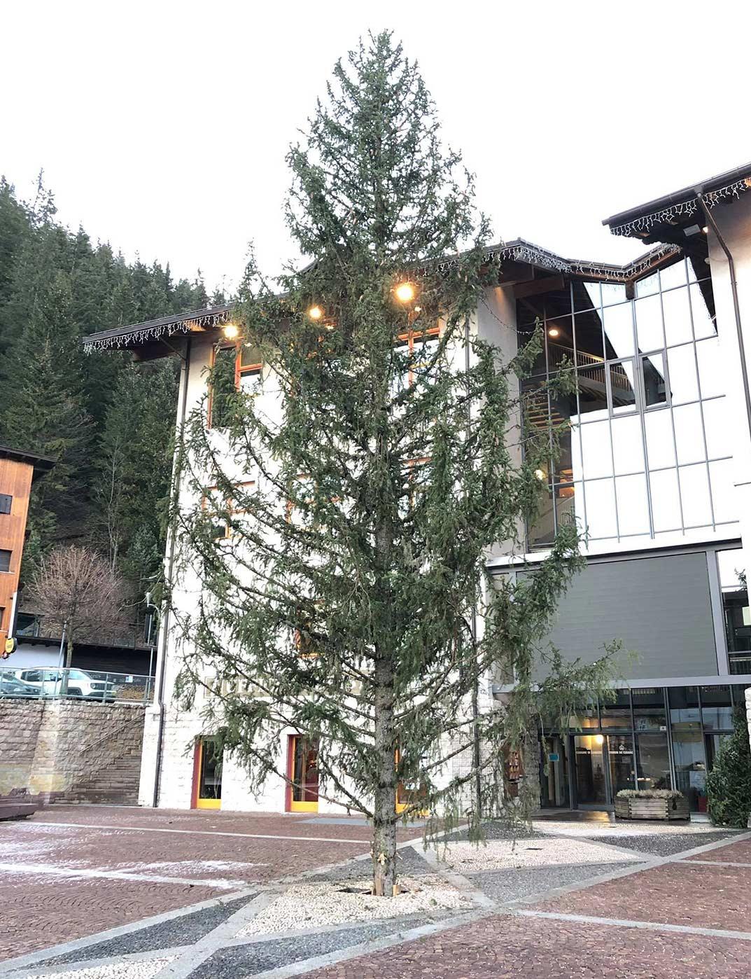 L'albero di Natale di Canazei, come monito contro il dissesto idrogeologico
