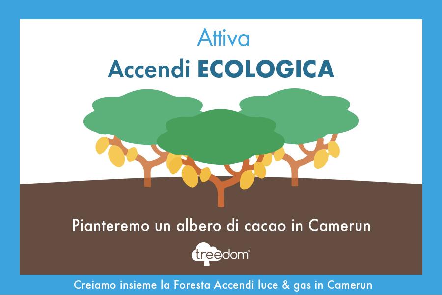 Attiva Accendi ECOLOGICA e pianteremo un albero di cacao