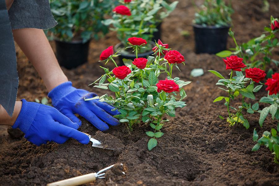 concimare le piante con i fondi di caffè
