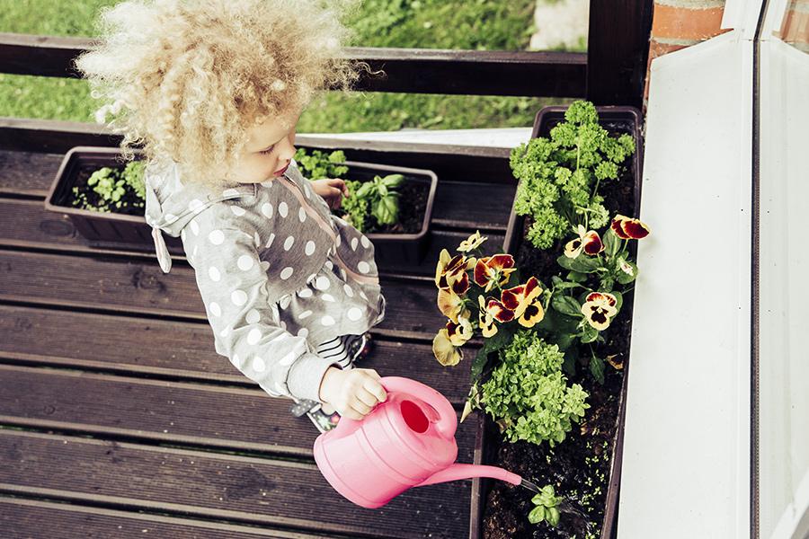 come coltivare il proprio orto casalingo