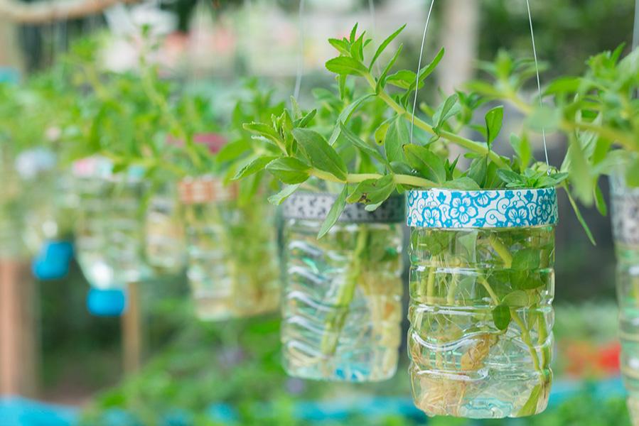 Scarti di verdure da coltivare: il regrowing
