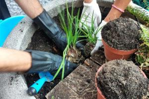 Operazione di guerrilla gardening di Cleanap